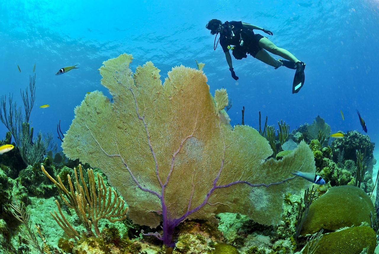 快來菲律賓潛水,考證照便宜又超美